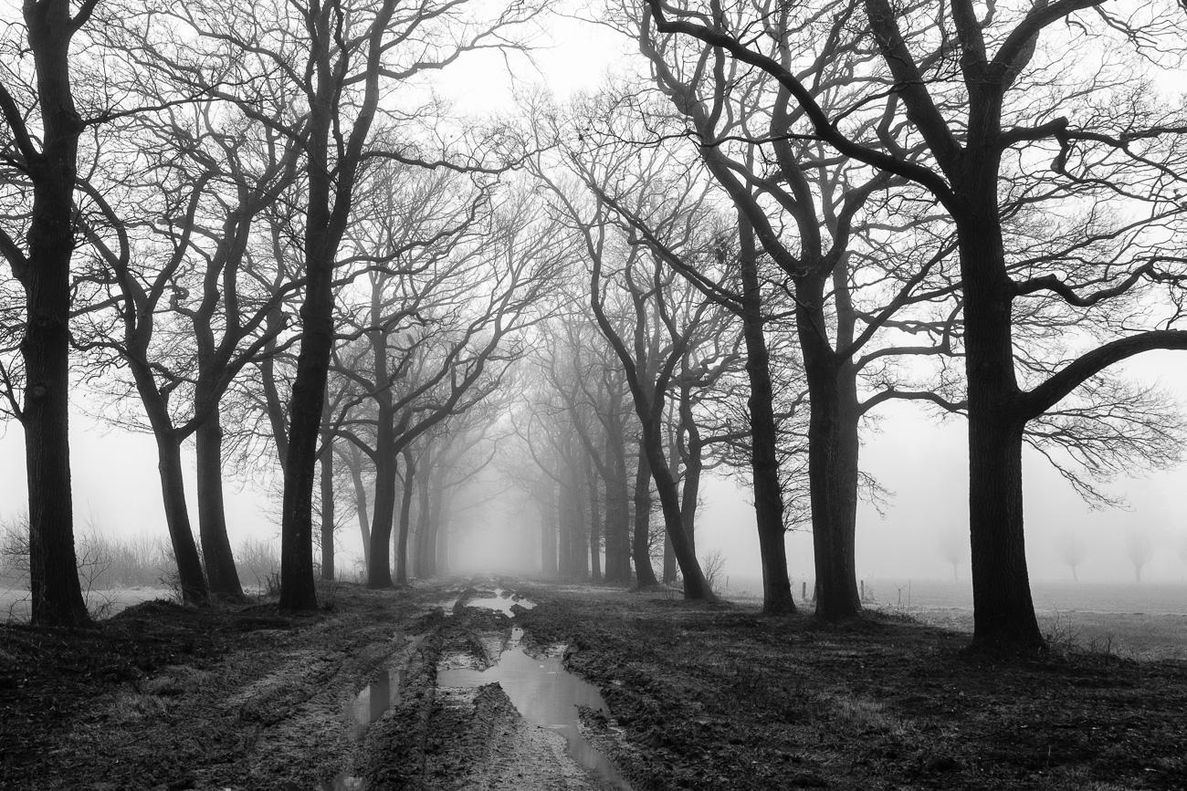 Landschap bij Dalfsen in de mist